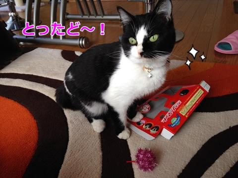 猫箱おもちゃ好き