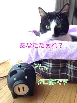 猫と蚊取り対策