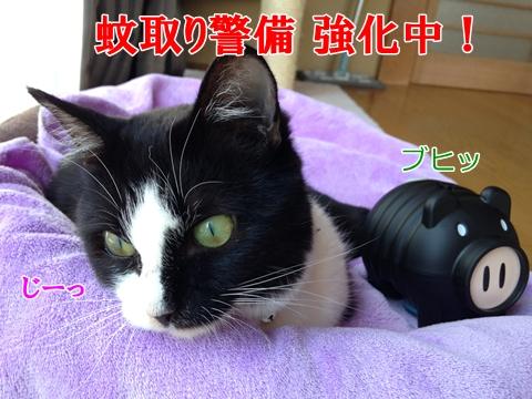 猫蚊取り線香アース