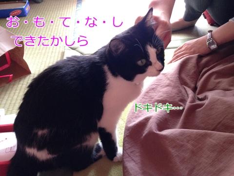 猫来客おもてなし