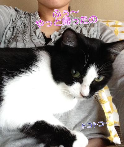 膝に乗って毛づくろいする猫