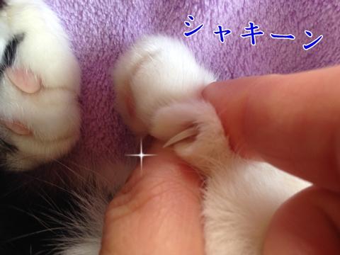 猫の爪尖ってる