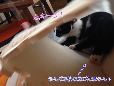 猫遊び大興奮