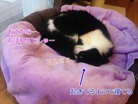 猫ニャンモナイト