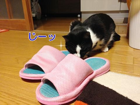 スリッパ好きな猫ムスビにご用心