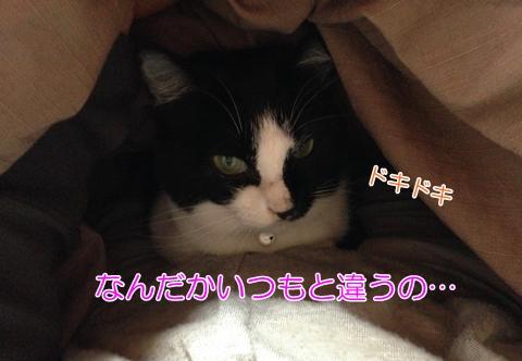 猫は地震を予知する?怖がるムスビ
