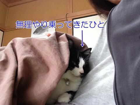 猫も地震が怖い