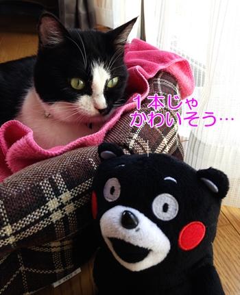 猫のヒゲケース