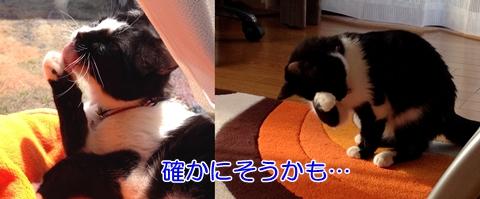 猫利き手で顔洗い