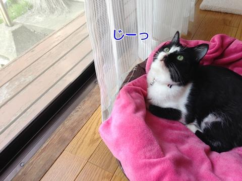猫天井を見る