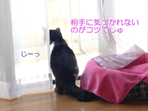 猫窓の外を見る