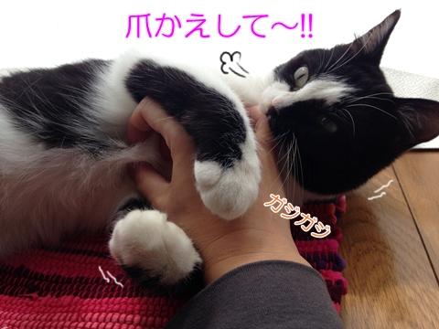 猫爪はがれる黒い