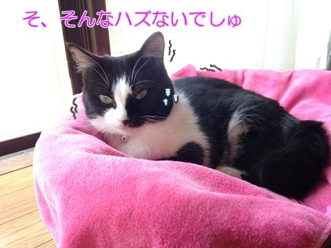 豆猫ムスビ、最近太った?体重測定!