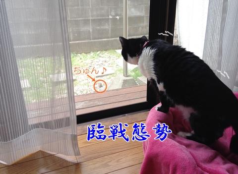 猫鳥と仲良し?