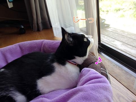 猫窓の外見る