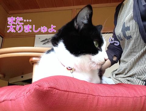 猫人間の食べ物興味なし