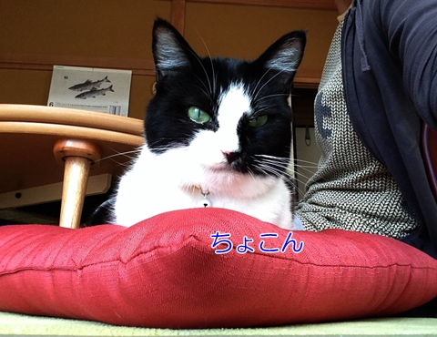 猫と座布団