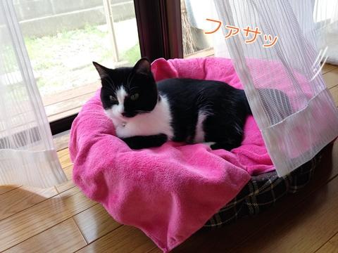 猫天蓋ベッド