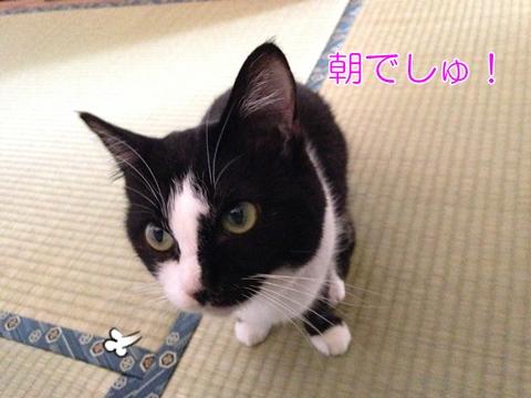 猫の体内時計の正確さ&猫クッキー