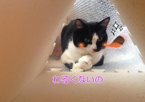 トイレットペーパーの芯でお手軽猫おもちゃ