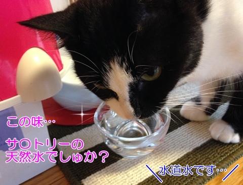 猫水入れ100均