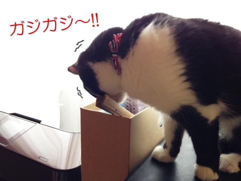 猫噛む癖の理由