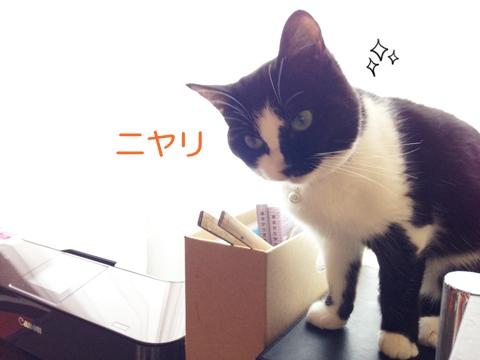 猫ムスビ、噛む癖はなぜ?その理由とは