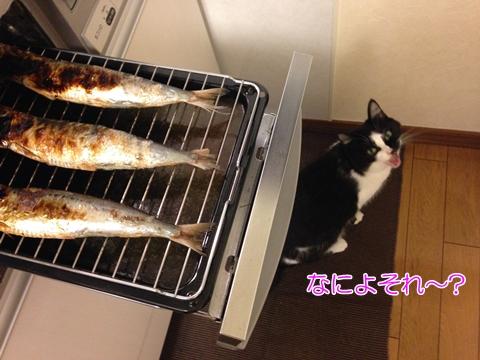 猫はやっぱり魚好き?人間の食べ物を欲しがるか
