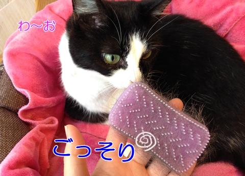 猫の抜け毛におすすめのシリコンブラシをゲット