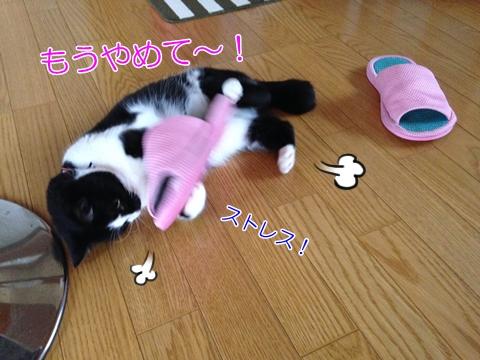 猫ストレス発散