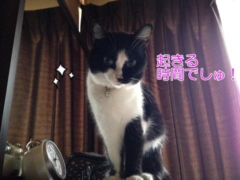 猫体内時計正確にわかる