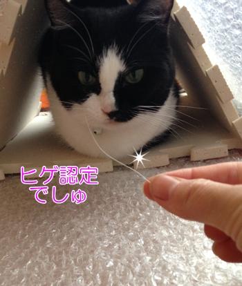 猫ヒゲ幸運のお守り