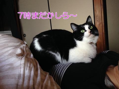 猫は時間感覚がわかる
