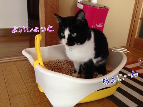 猫トイレ事件簿:臭うのに消えたうんち…