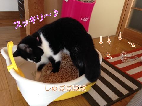 猫トイレ砂かき