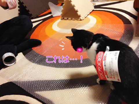 猫プチプチ大好き
