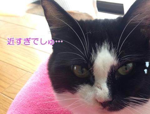 猫の涙はなぜ赤茶色い?透明だと病気!?
