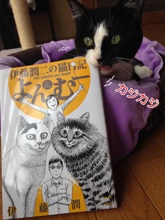猫日記よん&むー