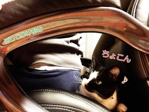 猫椅子よじ登り奪う