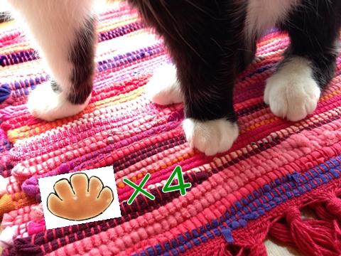 猫の足クリームパン