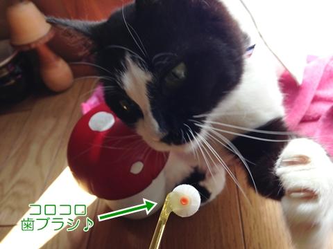猫歯ブラシ嫌がる
