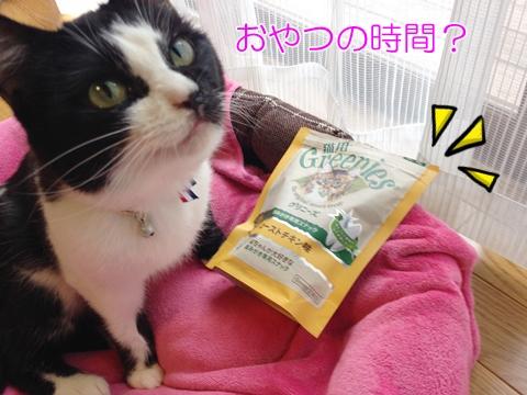 猫歯磨きオヤツ