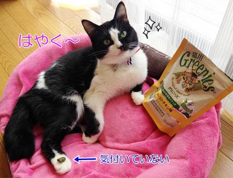 猫歯磨きおやつ