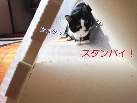 遊びに誘う猫
