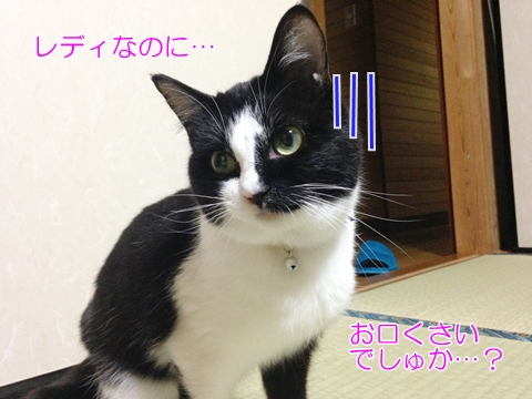 猫に歯磨きは必要?口臭対策のおやつ!
