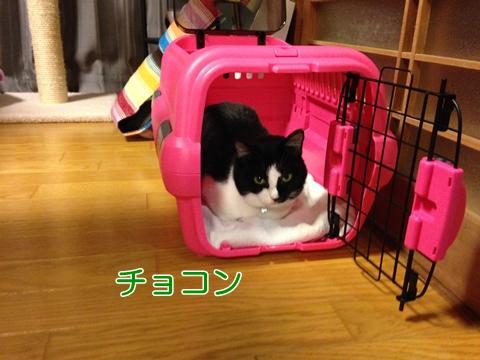 猫ケージに入る
