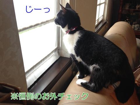 猫窓の外眺める