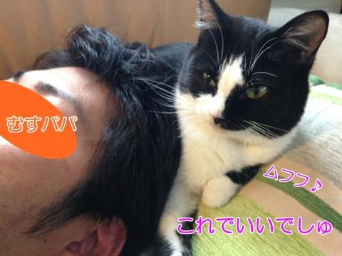 猫頭に乗る