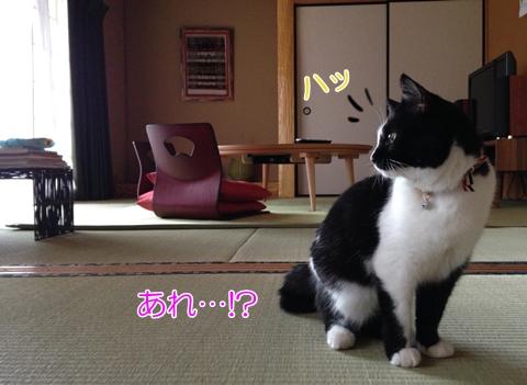 猫こたつしょんぼり