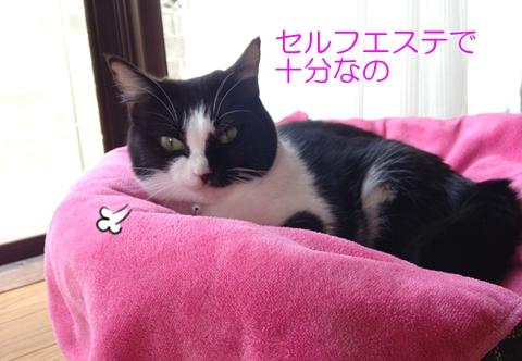 猫シャンプー必要